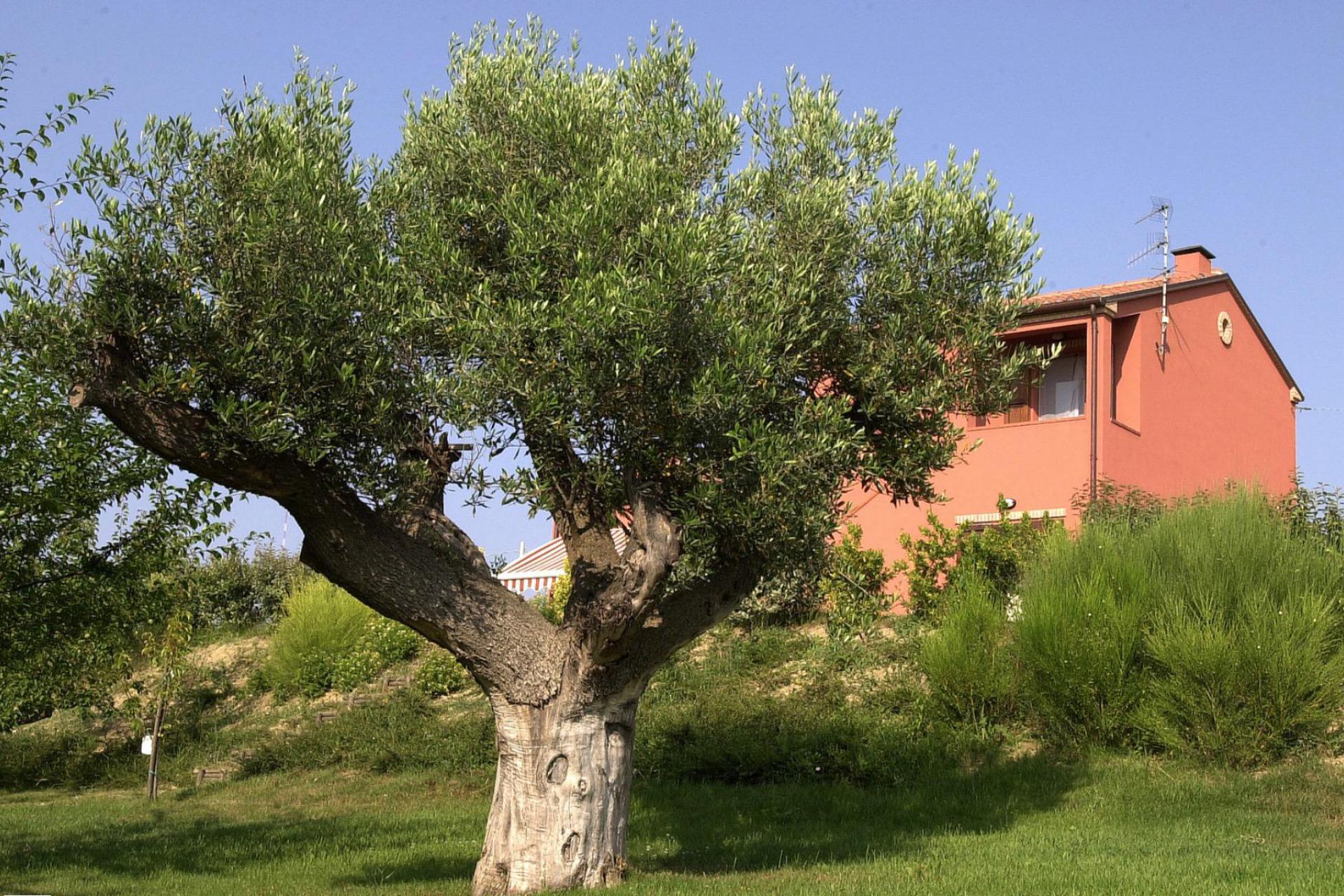 Agriturismo Le Marche Agriturismo le Marche met restaurant tussen olijfbomen