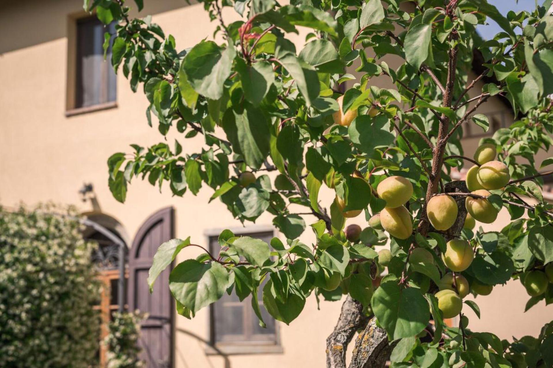 Agriturismo Toscane Agriturismo Toscane in olijfgaard met prachtig uitzicht