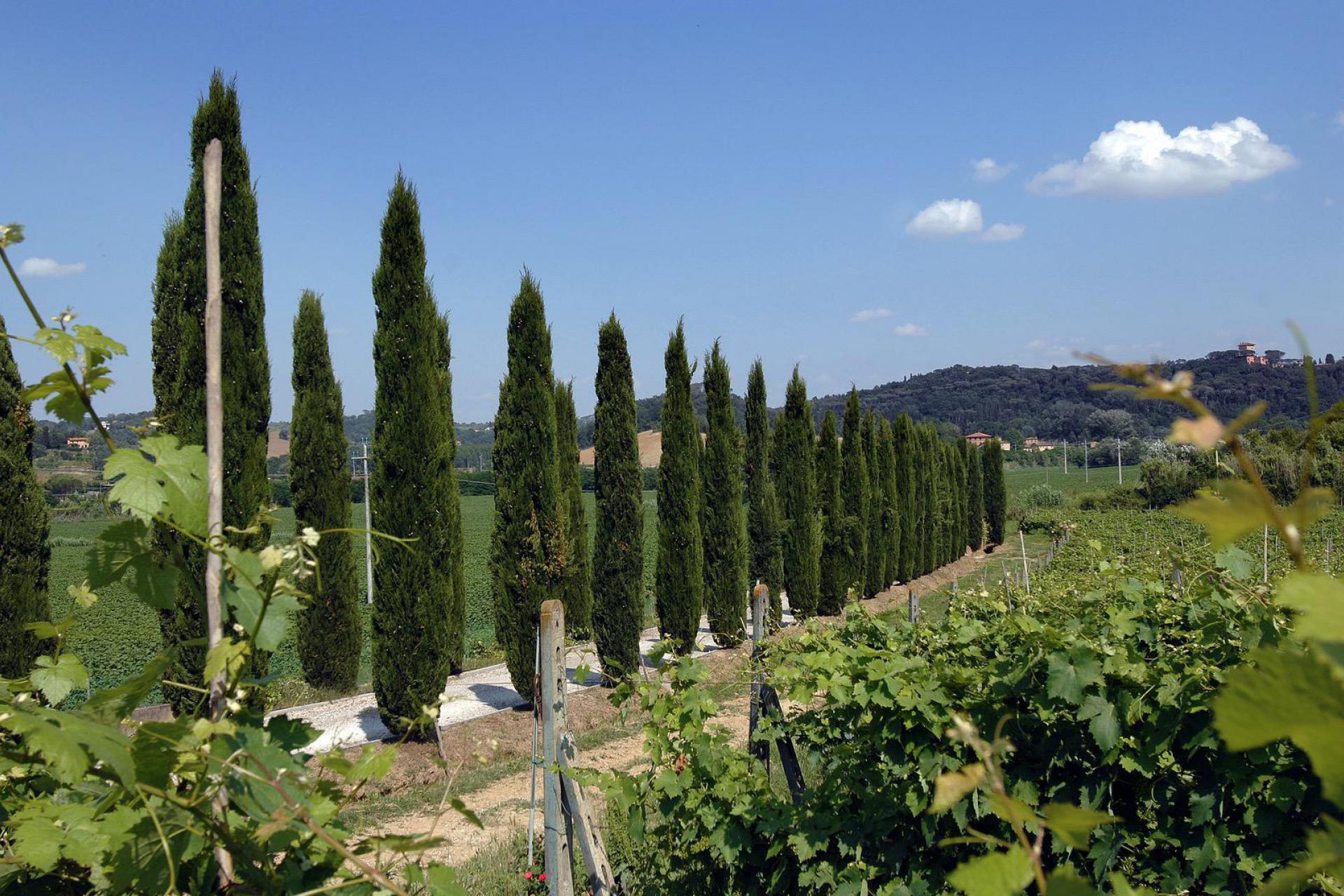 Agriturismo Toscane Agriturismo voor gezinnen met ruim zwembad en kinderbad