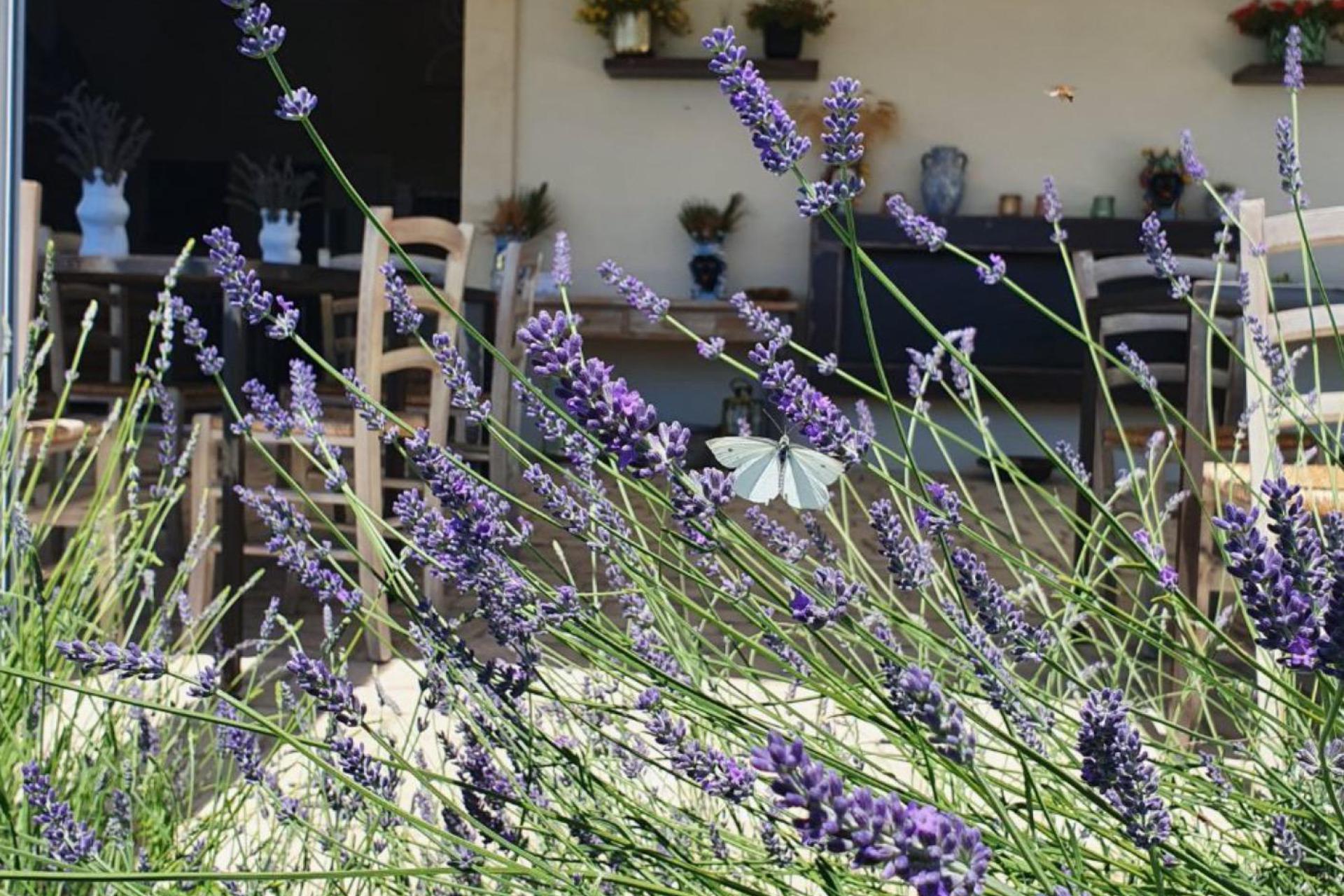 Agriturismo Sicilie Bio agriturismo Sicilië met mooi zeezicht