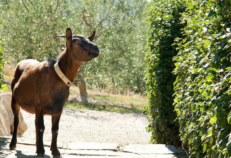 Agriturismo Umbrie Heerlijk rustige agriturismo in de natuur van Umbrie
