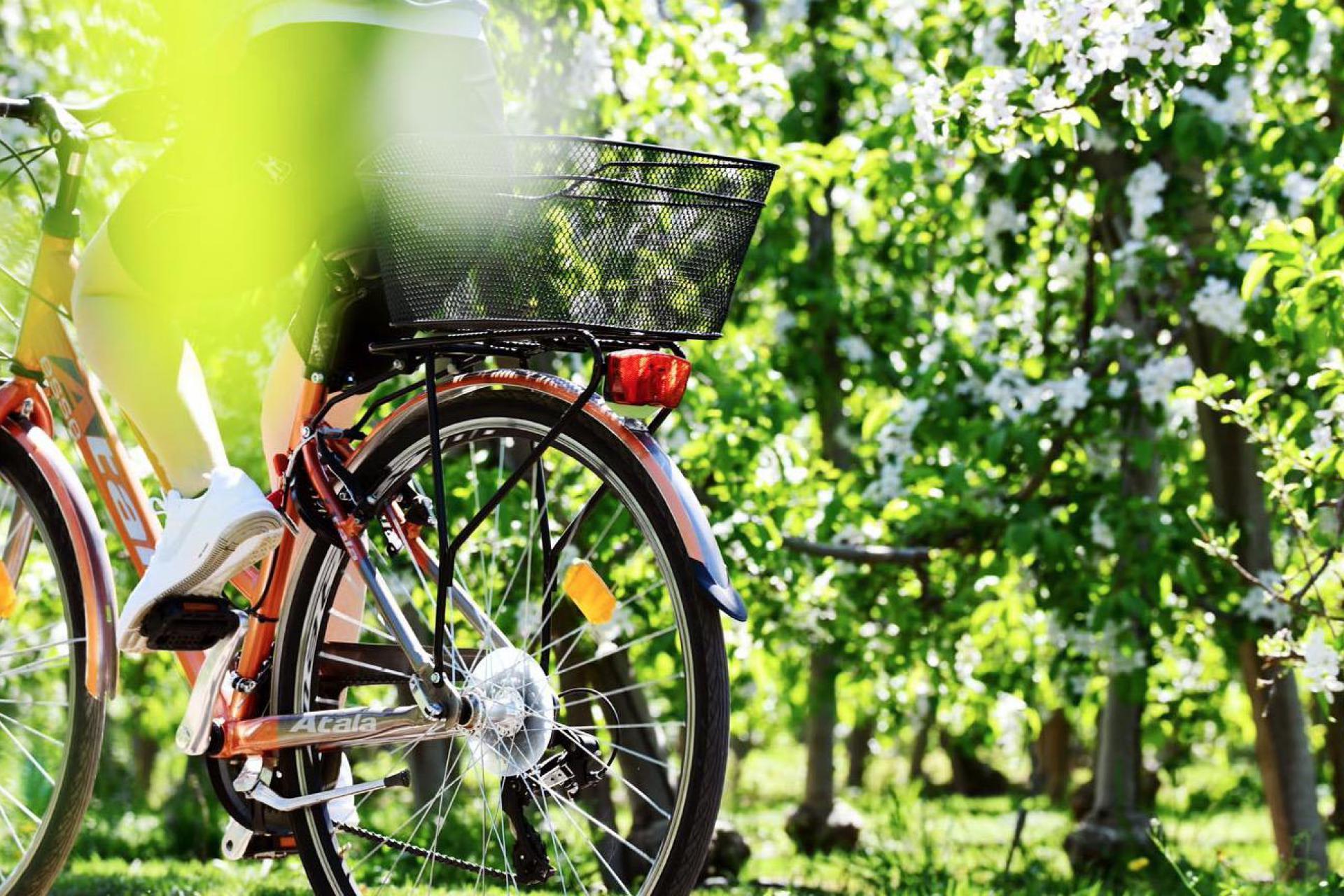 Agriturismo Dolomieten Leuke agriturismo in een appelgaard in Sudtirol