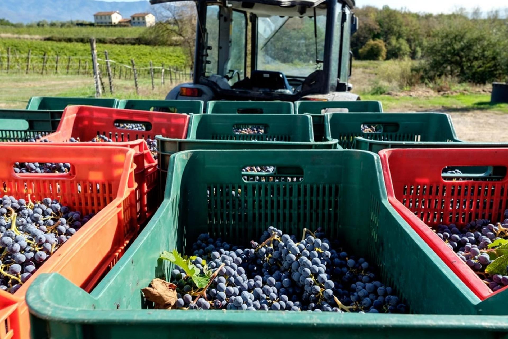 Agriturismo Toscane Mooie wijn agriturismo in de Chiantistreek, Toscane