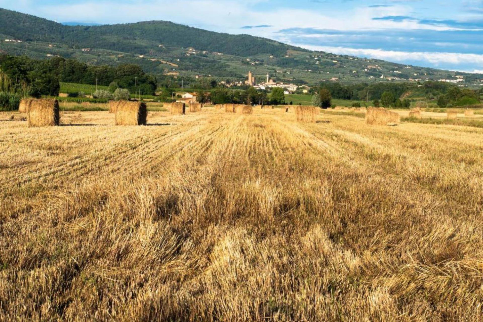Agriturismo Toscane Ontdek Toscane vanuit deze centraal gelegen agriturismo