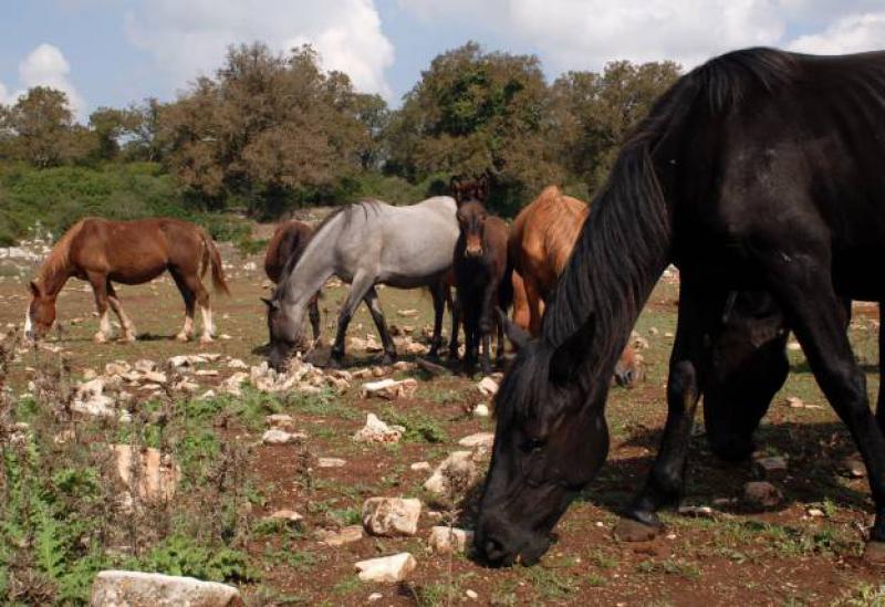 Agriturismo Puglia Rustig gelegen agriturismo in de natuur van Puglia