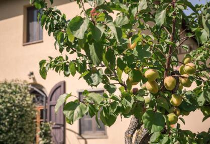 Agriturismo Toscane in olijfgaard met prachtig uitzicht