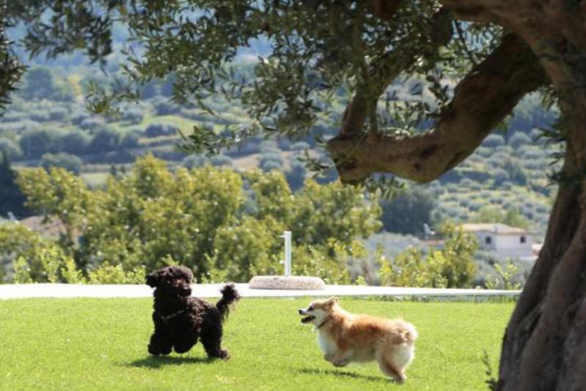 Agriturismo Sicilie Tussen olijf- en amandelbomen verscholen knusse agriturismo