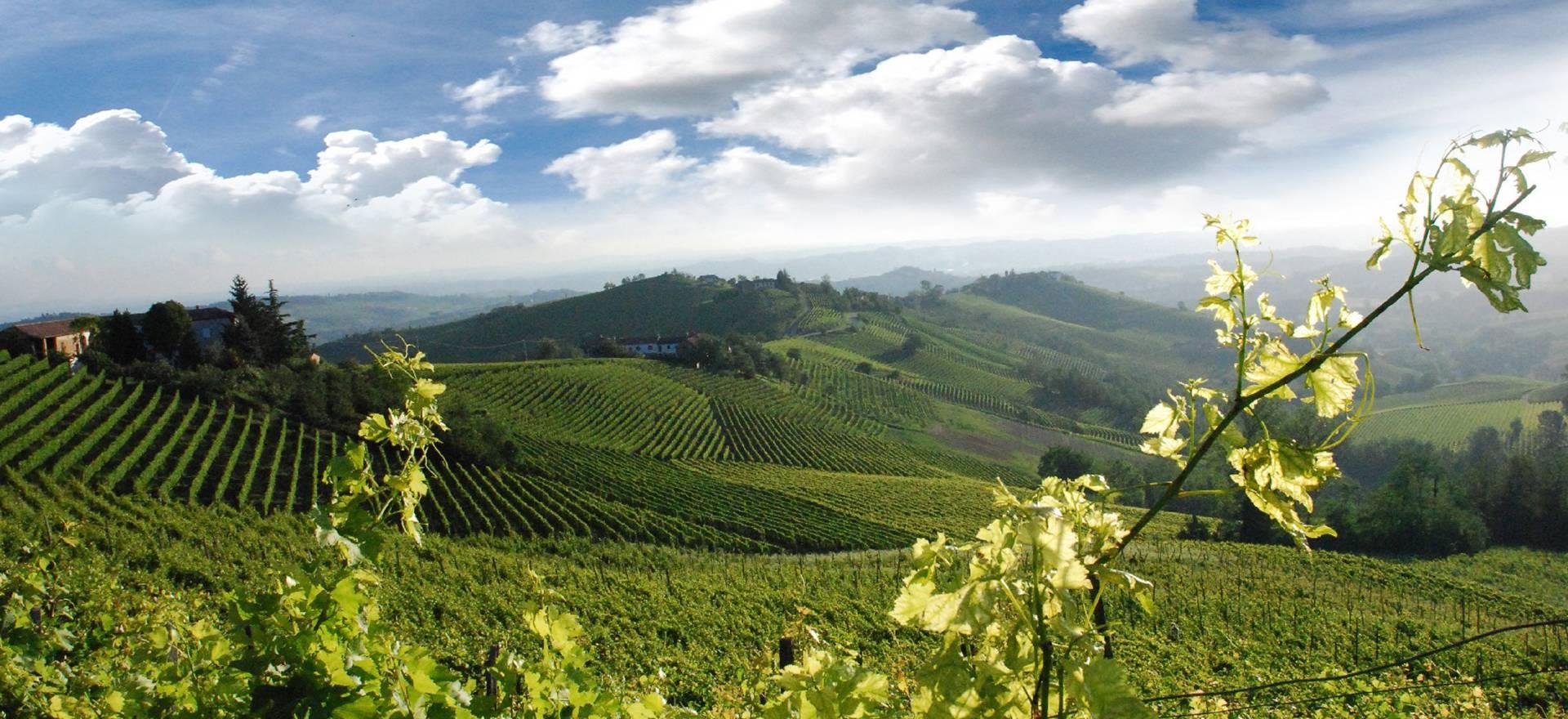 Agriturismo Piemonte Agriturismo en wijnboerderij in de heuvels van Piemonte