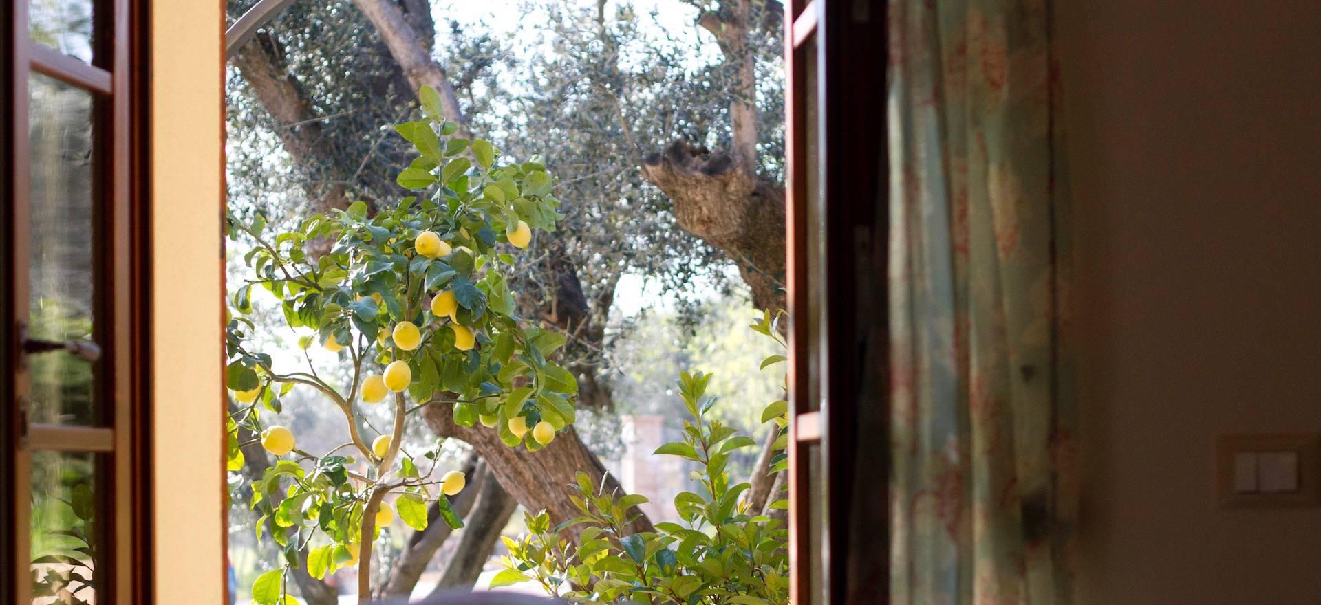 Agriturismo Toscane Agriturismo in olijfgaard nabij de Toscaanse kust