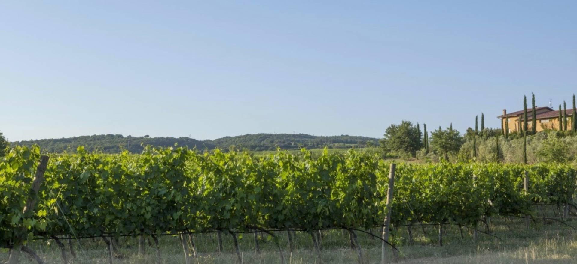 Agriturismo Toscane Elegante agriturismo nabij Montalcino